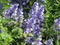 Bluebells--Be still my heart!